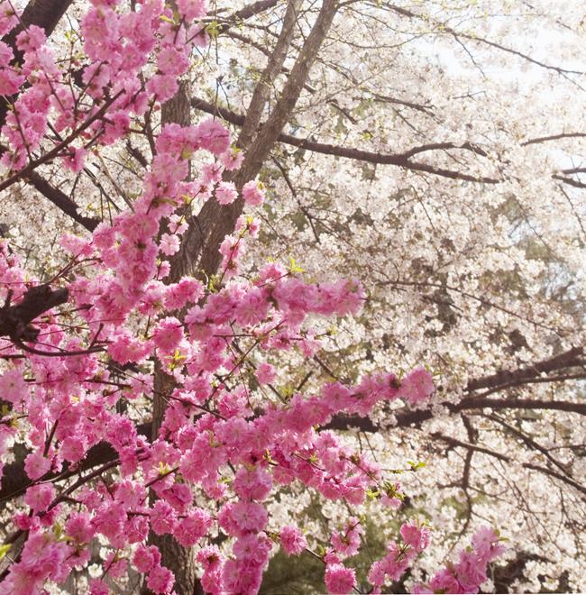 - 꽃 피는 봄에, 약속대로.