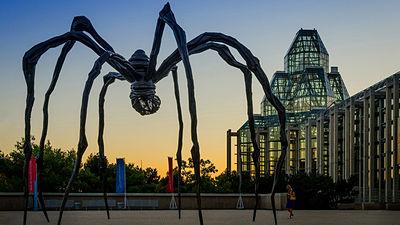 전 세계에 서식하는 거미의 연간 포식량은 전 인류의..