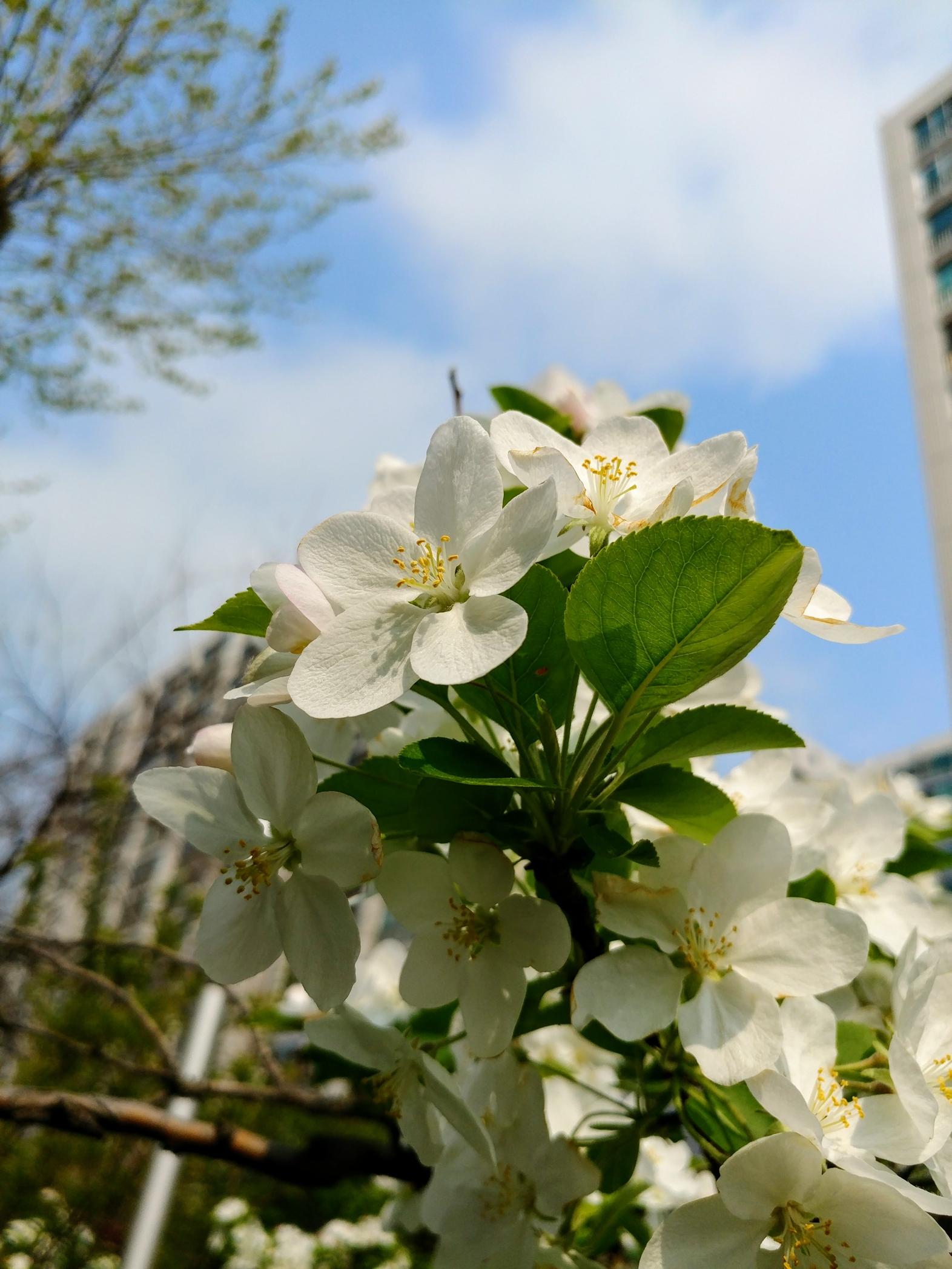 벚꽃만 있나? 봄이 좋아