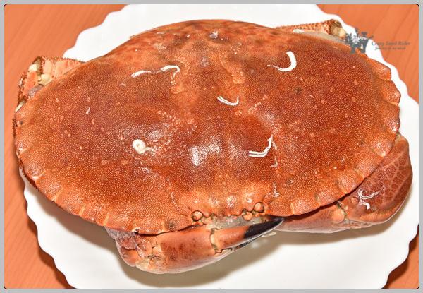 [갑각류 연재 31] 영국에서 잡히는 게 Devon crab