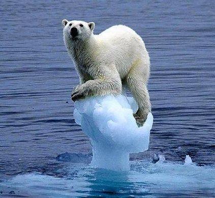 빙산 납치범 발생!