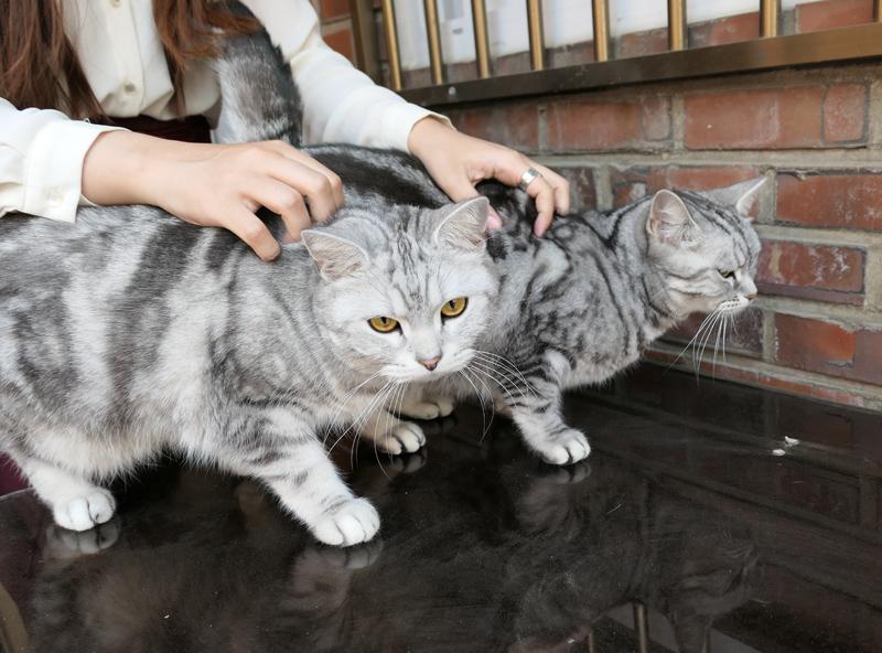남의 집 고양이들