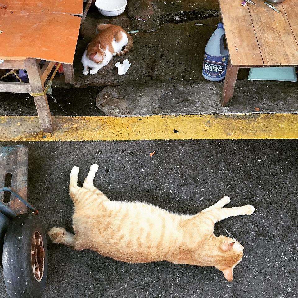 대프리카의 시장 고양이들