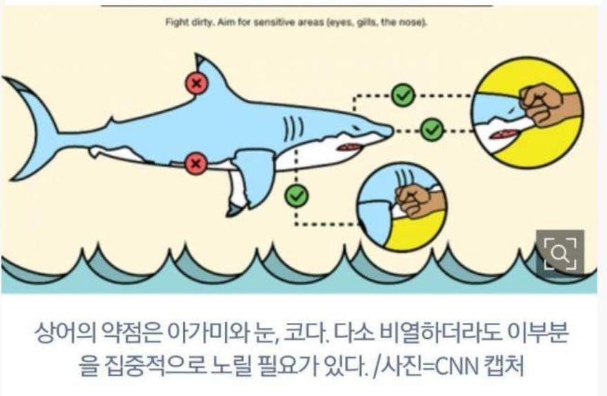 상어를 만났을때 대처법!!!