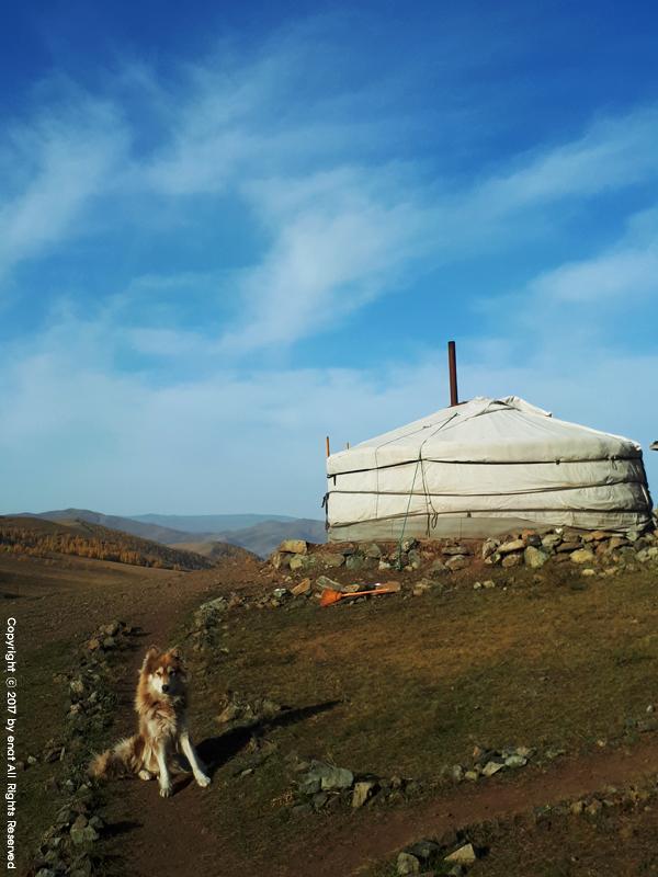 몽골 자유여행 (5.2) 게르 생활 : 아침밥