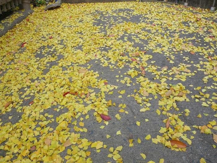 계단을 따라 정렬한 낙엽