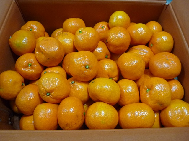 귤 한 상자로 겨울에 열량과 비타민 C 보충을