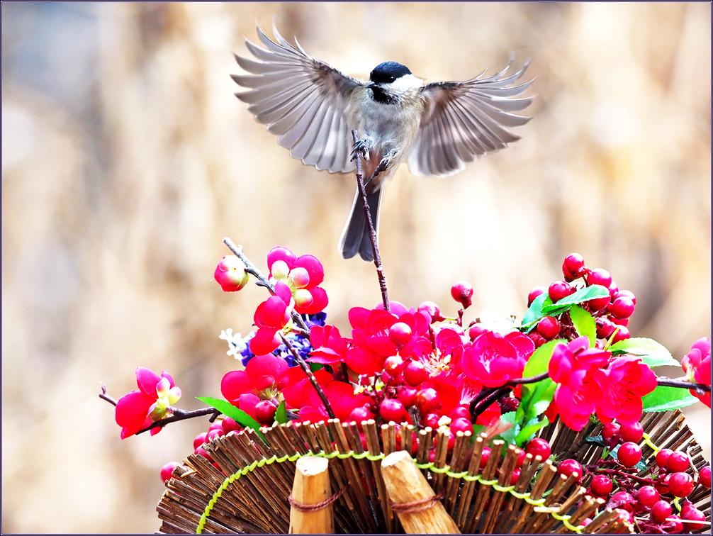 꽃지게 타는~~~쇠박새