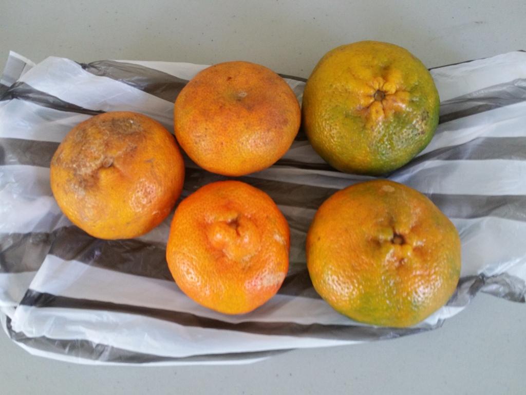 [도미니카공화국] Mandarina(귤)가 좋아