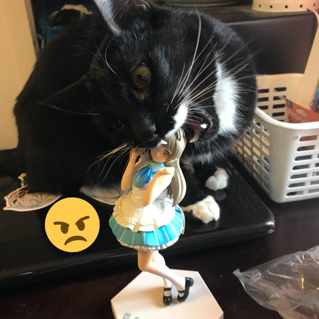 고양이도 인정하는 치킨의 맛