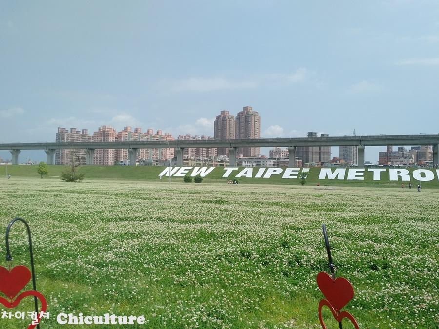 대만 타이베이 지하철역 부근 공원의 엄청난 양의 ..