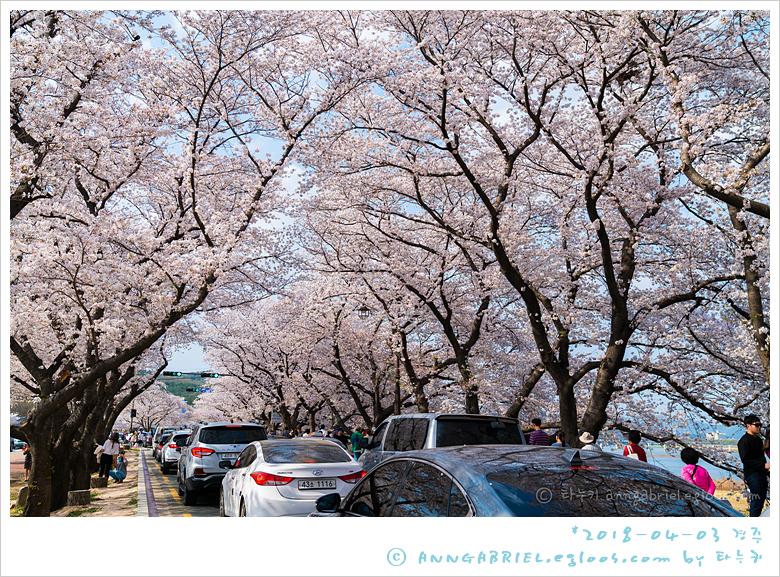[경주] 만개한 흥무로 벚꽃길, 김유신장군묘