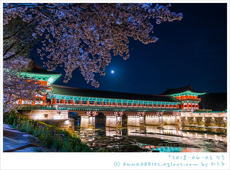 [경주] 월정교와 벚꽃 야경