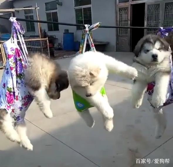 중국 대륙 강아지 말리는 방법