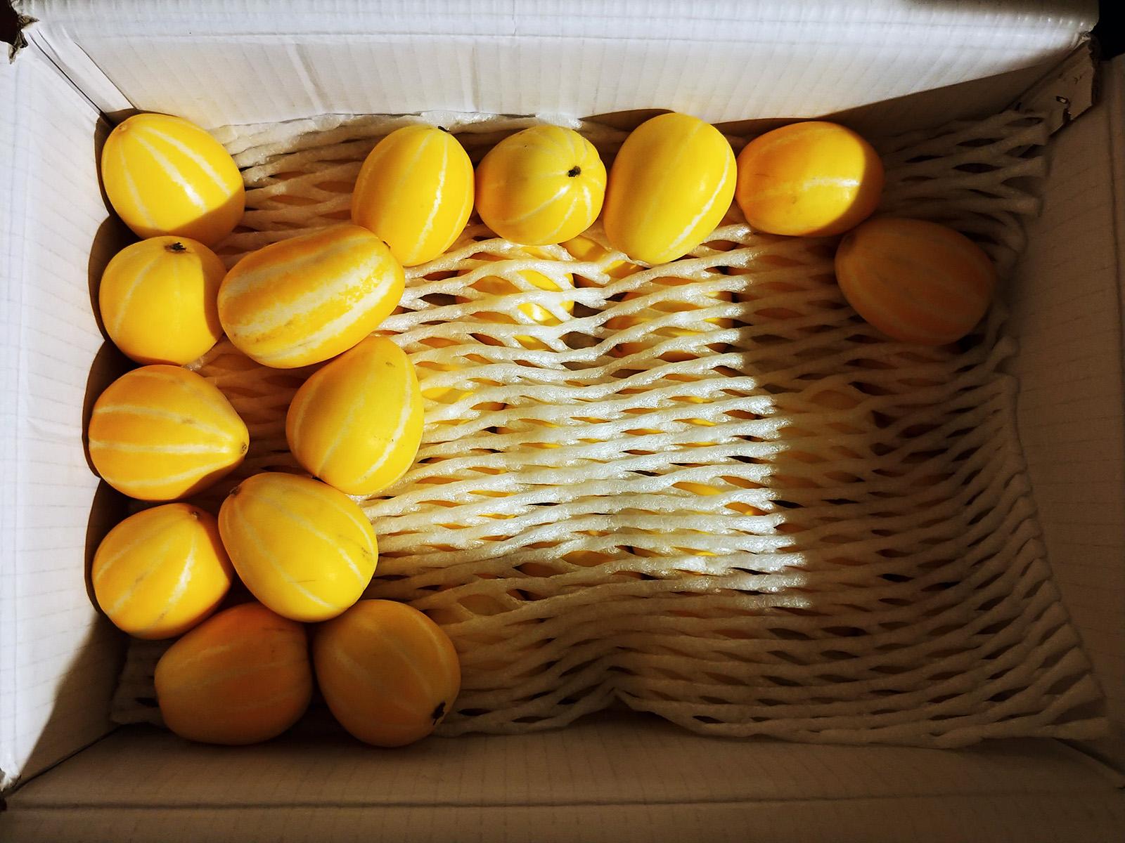 두번 놀라게 되는 신기한 과일