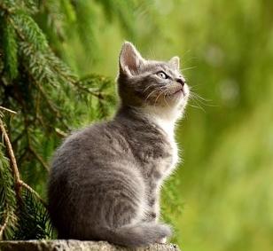 상황별 고양이꿈 해석 풀이