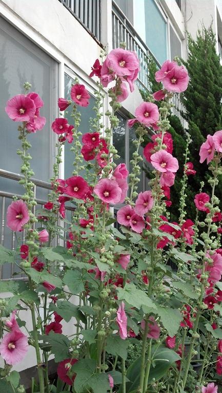 호박벌의 꽃가루 수분 현장