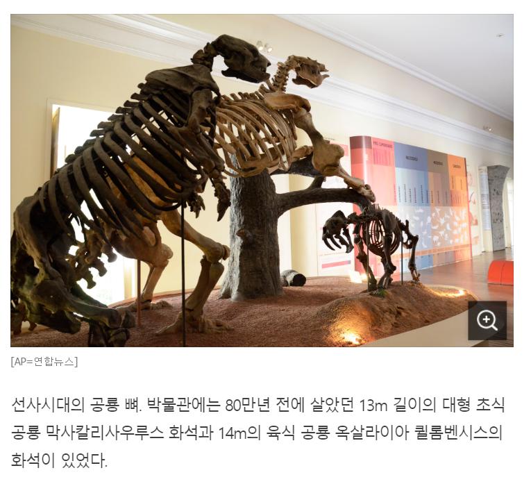 공룡? 공룡?