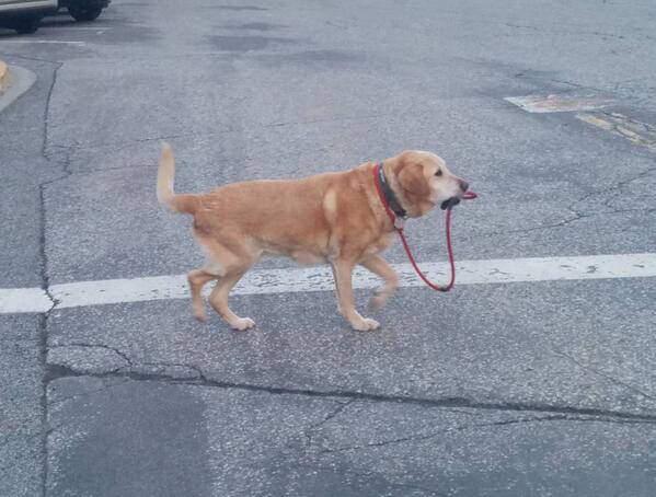 개「그래, 산책이나 갈까